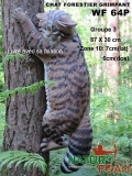 CHAT FORESTIER - GRIMPANT NF