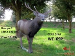 CERF SIKA NF